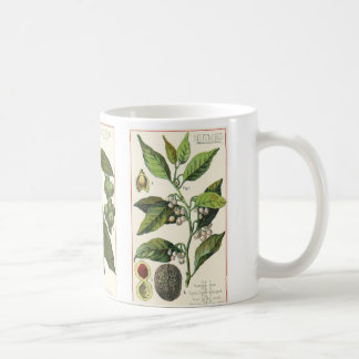 Vintage Food Herbs Spices, Botany of Cloves Coffee Mug