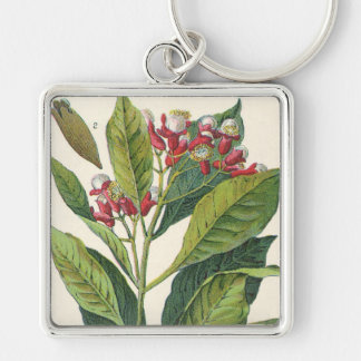 Vintage Food Herbs Spices, Botany of Cloves Silver-Colored Square Keychain
