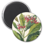 Vintage Food Herbs Spices, Botany of Cloves 2 Inch Round Magnet