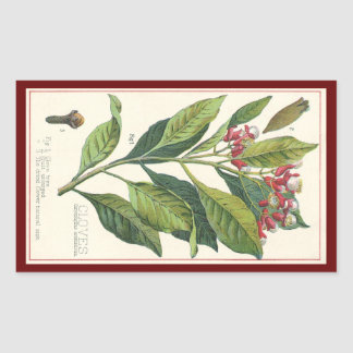 Vintage Food Herbs Spices, Botany of Cloves Rectangular Sticker