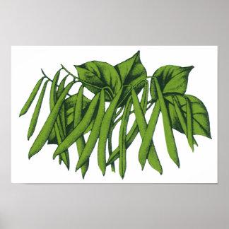 Vintage Food, Organic Green Beans Vegetables Poster