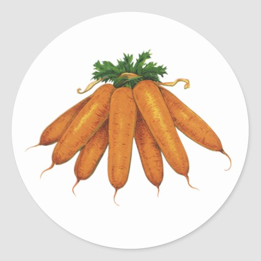 Vintage Food, Vegetables; Bunch of Organic Carrots Classic Round Sticker
