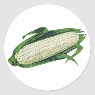 Vintage Food Vegetables White Corn on the Cob Classic Round Sticker