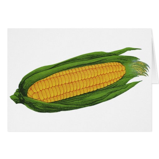 Vintage Food Vegetables; Yellow Corn on the Cob Greeting Card