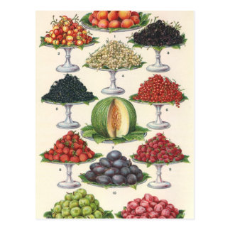 Vintage Foods Assorted Fruit on Trays for Catering Postcard