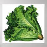 Vintage Foods, Vegetables, Green Leaf Lettuce Print