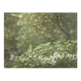Vintage Forest Faerie Postcard