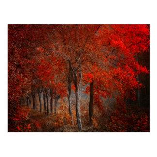Vintage Forest Scene Postcard