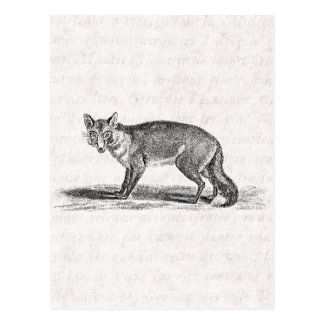 Vintage Foxy Fox Illustration -1800's Foxes Postcard