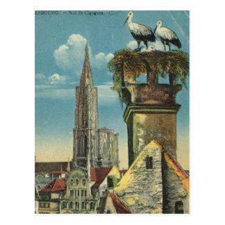 Vintage France, Strassbourg, Stork nests 1930 Postcard