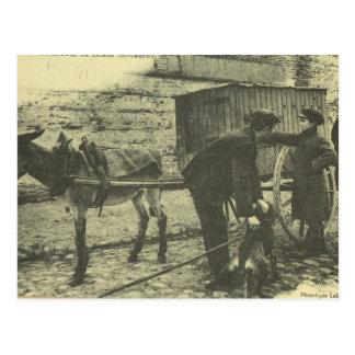 Vintage France, Toulouse, rat trapper at work 1900 Postcard