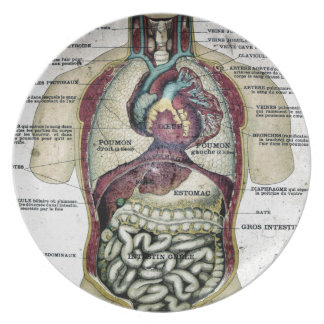Vintage French Anatomy Plate
