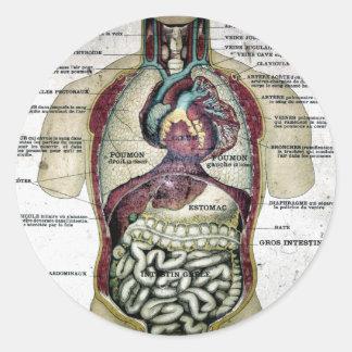 Vintage French Anatomy Sticker