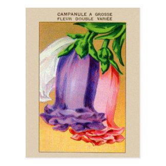 Vintage French Bellflower Flower Seed Package Postcard