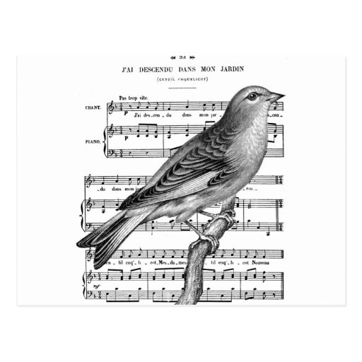 Vintage French Bird Song Music Postcard