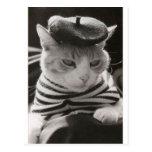 Vintage french cat postcard
