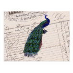 Vintage French Chic Blue Peacock Postcard