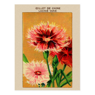 Vintage French China Carnation Flower Seed Package Postcard