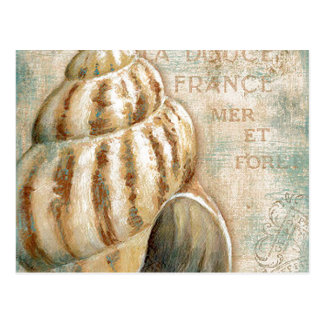 Vintage French Conch Shell Postcard