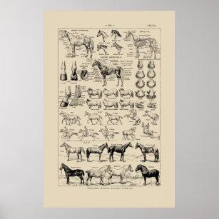 Horse Posters, Horse Prints & Horse Wall Art
