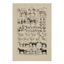 Vintage French Horse Breeds & Anatomy Chart Poster