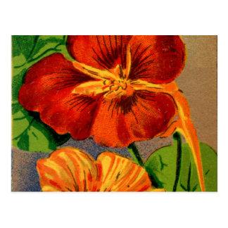 Vintage French Nasturtium Flower Seed Package Postcard