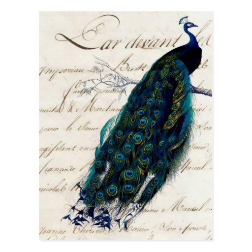 Vintage French Script Peacock Postcard