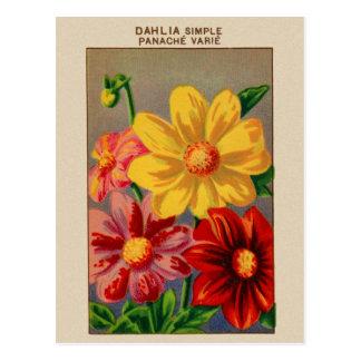 Vintage French Seed Art  Dahlia - dahlia simple Postcard
