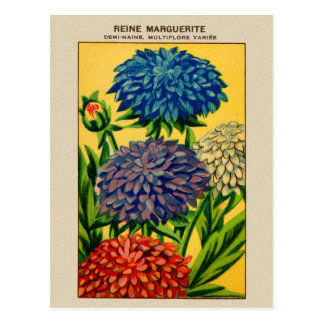Vintage French Seed Package Queen Daisy Postcards
