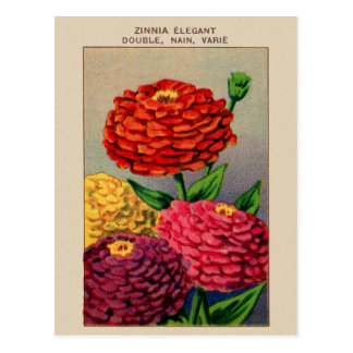 Vintage French Seed Package Zinnia Zinnas Postcard