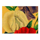 Vintage French Sweet Pea Flower Seed Package Postcards