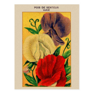 Vintage French Sweet Pea Flower Seed Package Postcard