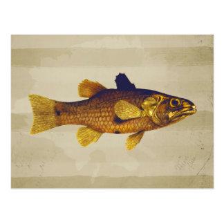 Vintage Freshwater Fish Ilustration Postcard