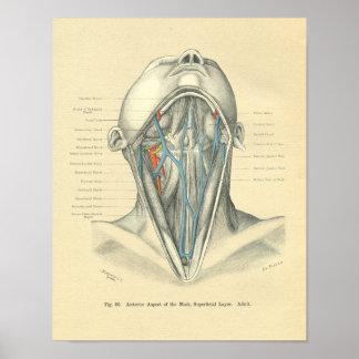 Vintage Frohse Anatomical Anterior Neck Poster