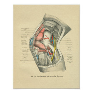 Vintage Frohse Anatomy of Knee Joint Poster
