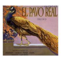 Vintage Fruit Crate Label Art El Pavo Peacock Bird Poster