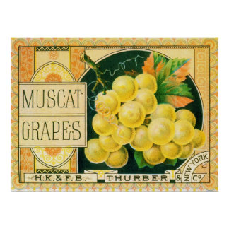 Vintage Fruit Crate Label Art, Muscat Grapes Poster