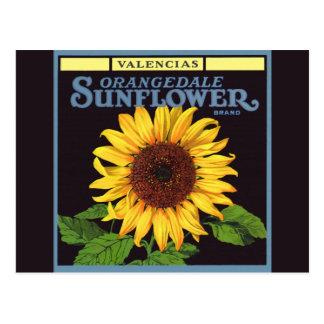 Vintage Fruit Crate Label Art Orangedale Sunflower Postcard