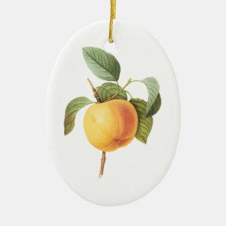 Vintage Fruit Food, Calville Apple by Redoute Ceramic Ornament