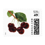 Vintage Fruit Foods, Ripe Cherries from a Tree Postage