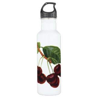 Vintage Fruit Foods, Ripe Cherries from a Tree Stainless Steel Water Bottle