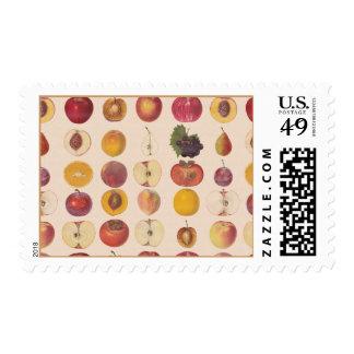 Vintage Fruit Pattern Postage
