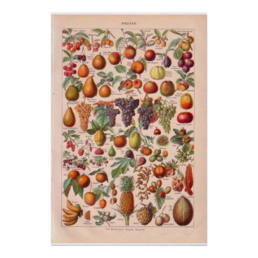 windsorprints Vintage fruits poster 1920