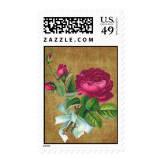 Vintage Fuchsia Rose Stamp