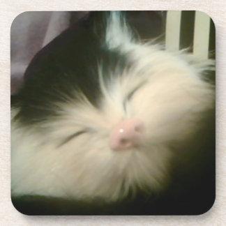 Vintage Fur Black White Kitten Retro Kitty Cat Drink Coasters