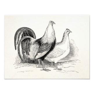 Vintage Game Fowl Chicken Birds Rooster Chickens Photo Art