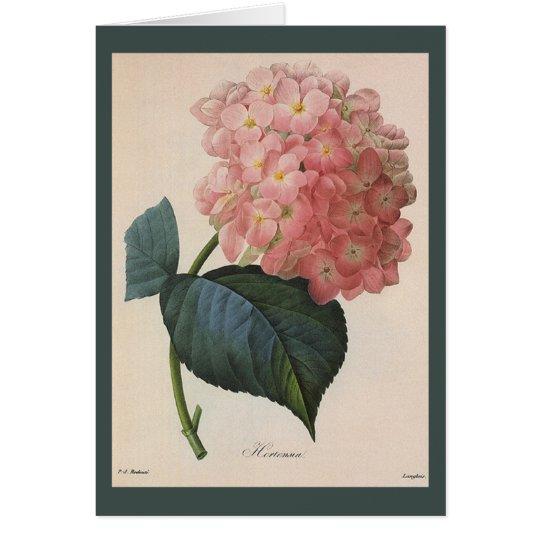 Vintage Garden Flowers, Pink Hydrangea Hortensia Card
