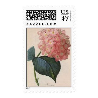 Vintage Garden Flowers, Pink Hydrangea Hortensia Postage Stamp