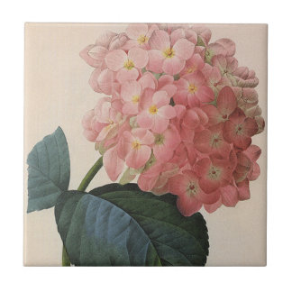 Vintage Garden Flowers, Pink Hydrangea Hortensia Tile
