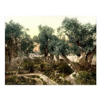 Vintage Garden of Gethsemane Jerusalem Israel 1890 Postcard